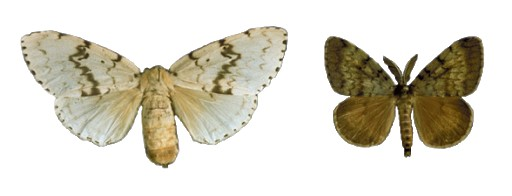 AGM-(male-and-Female)
