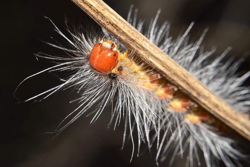 AGM-Catterpillar